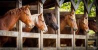 Содержание лошадей - главные правила ухода