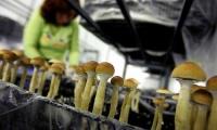 Выращивание грибов как вид бизнеса